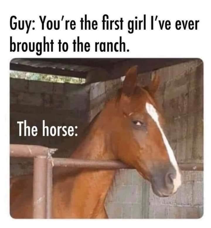 Horse - meme