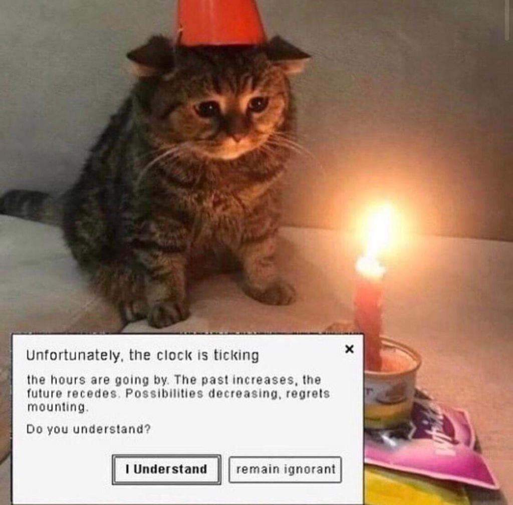 Kitty - meme
