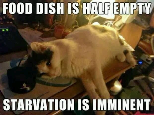 cat mentality - meme