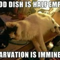 cat mentality