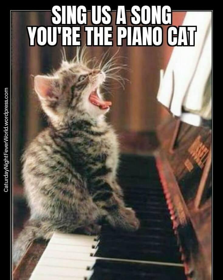 piano cat - meme