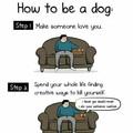 Ha dogs