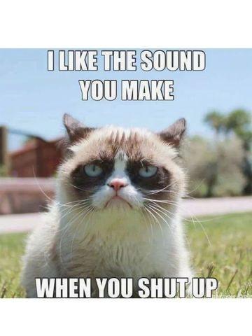 the cat meme