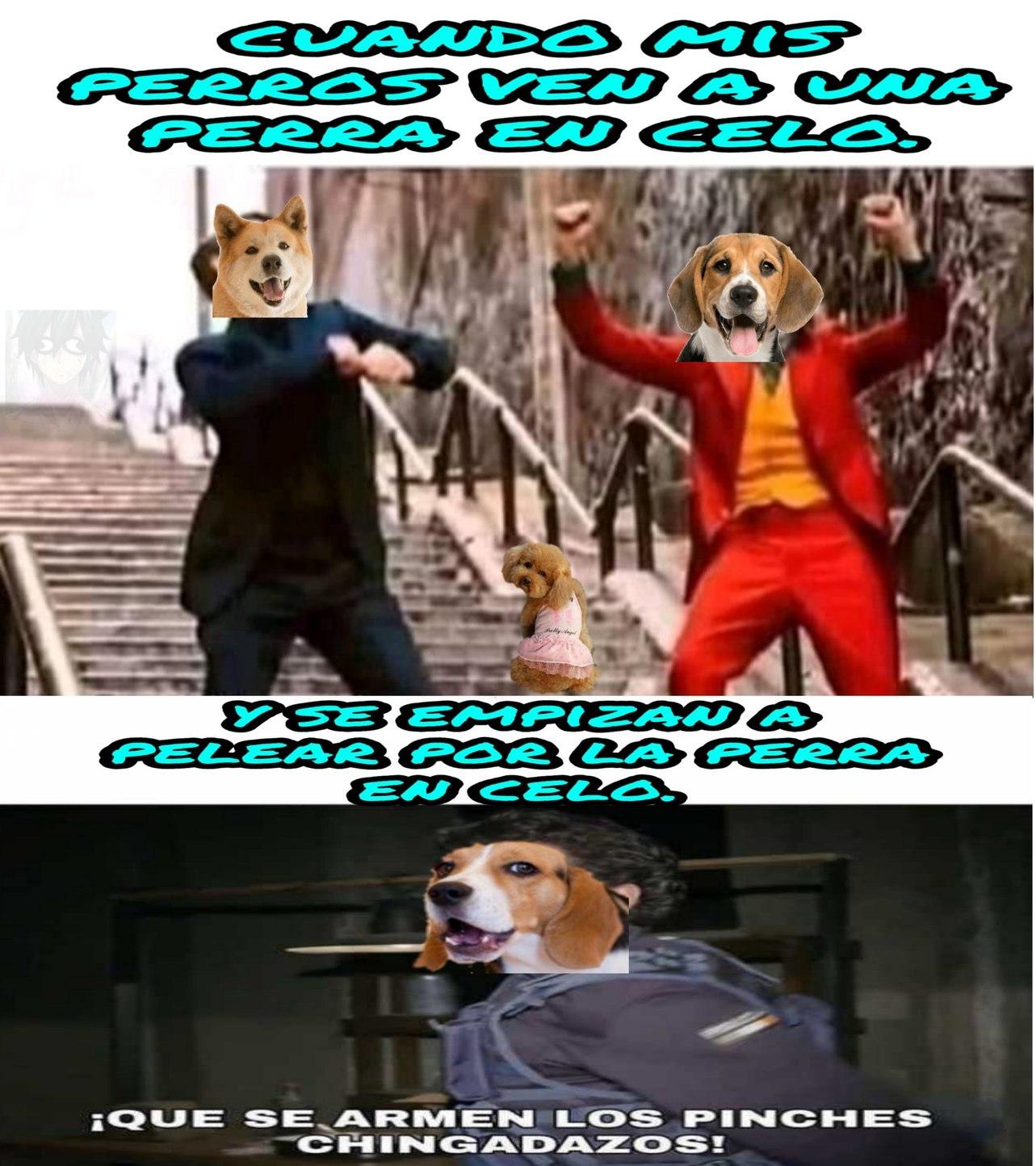Pelea de  perros en ingles - meme