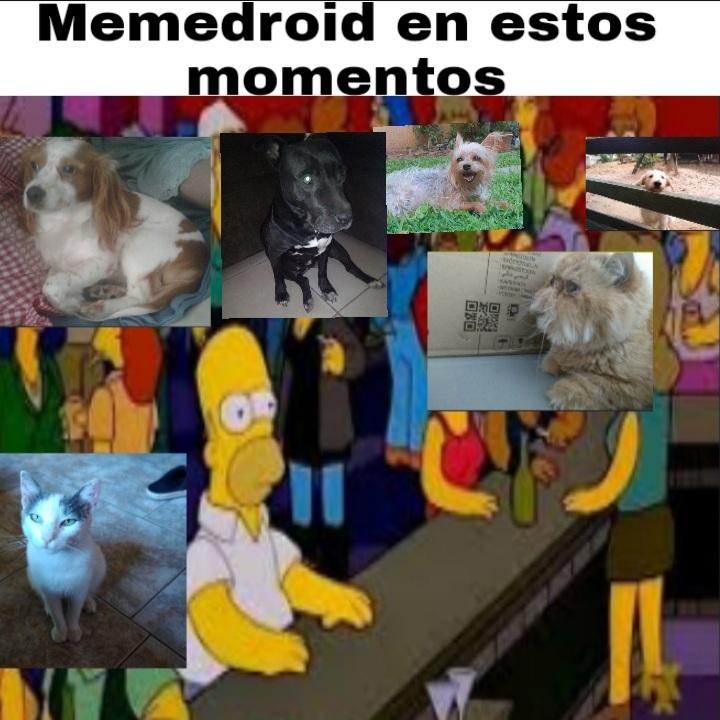 Mascotas feis rivil - meme