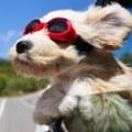Catching a little wind on a road trip a little bit of doggie heaven.
