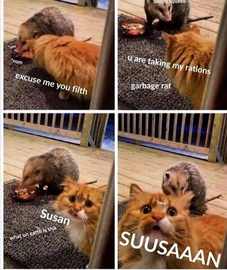 my rations - meme