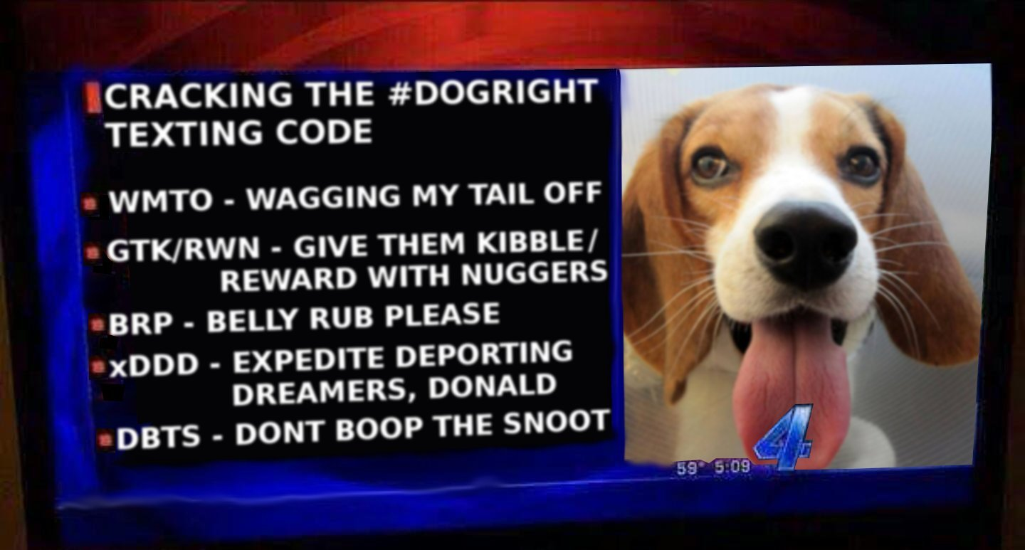 #dogright - meme