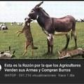 Quiero un burro