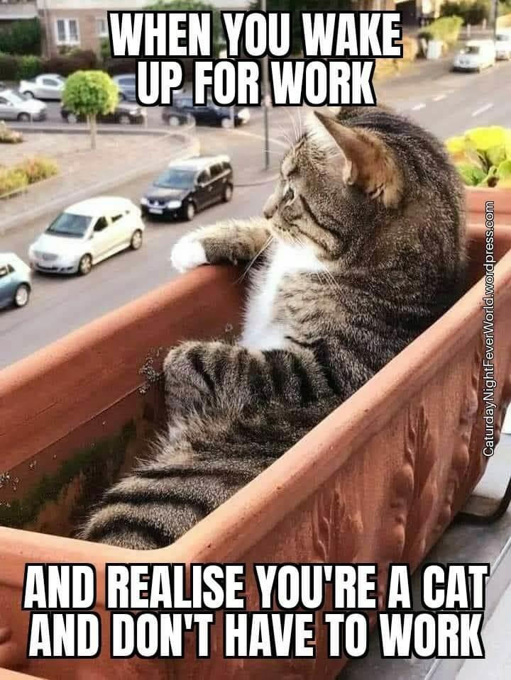 the cat life - meme