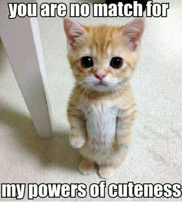 Very cute kitty cat - meme