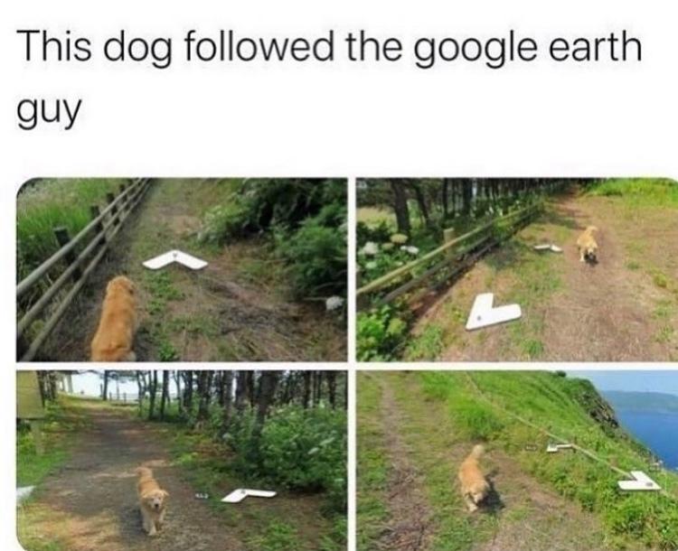 I will follow human - meme