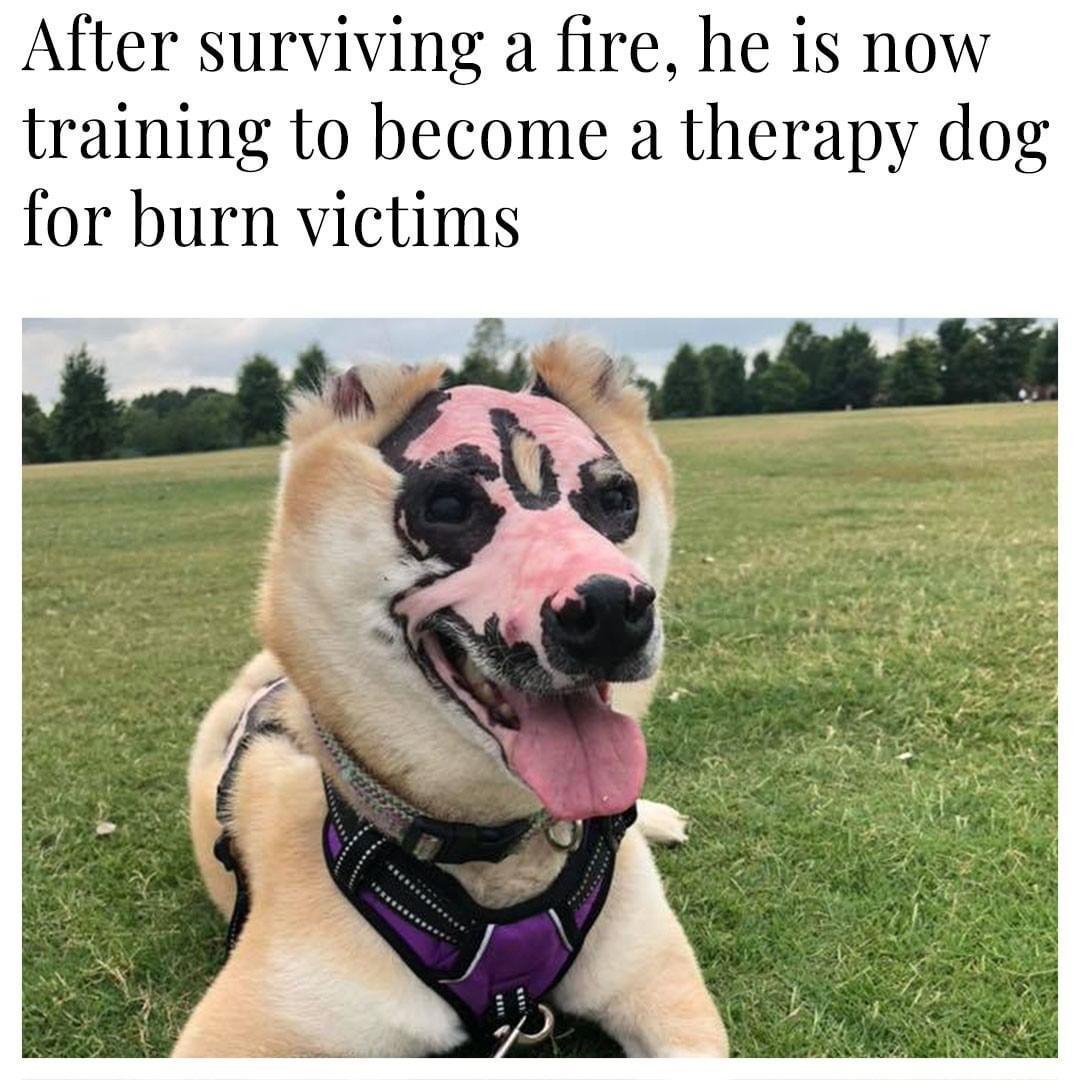 Darth Maul's dog? - meme