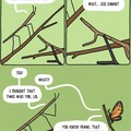 Insect problems