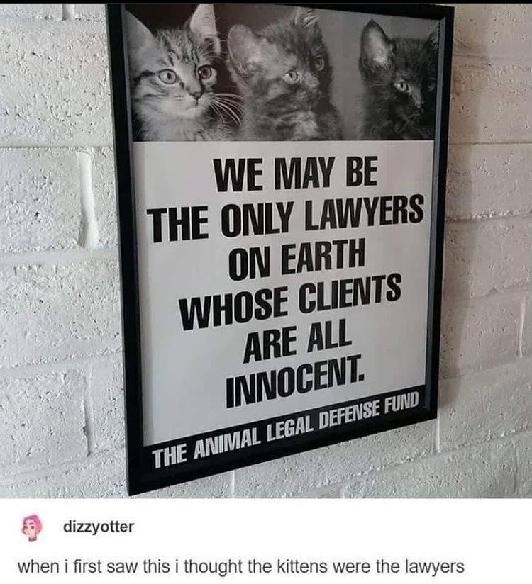cat lawyers - meme