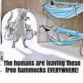 free hammocks