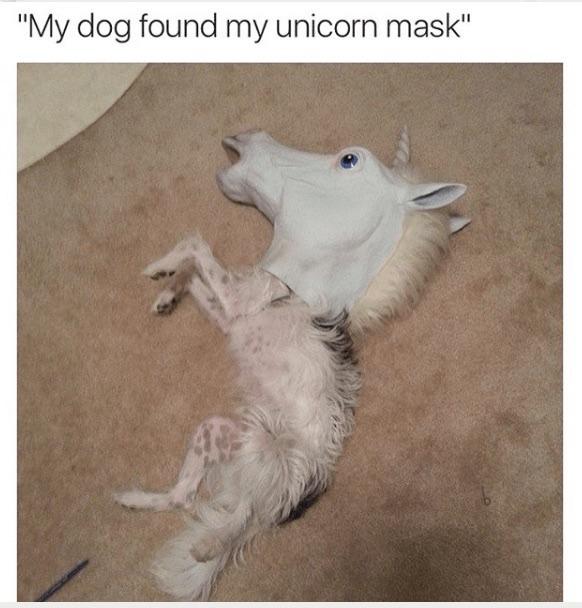 dogicorn - meme