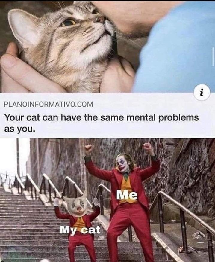 Poor catto - meme