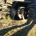 Built my dog a shelter out of stone