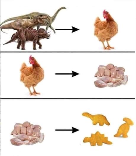 Fail évolution - meme