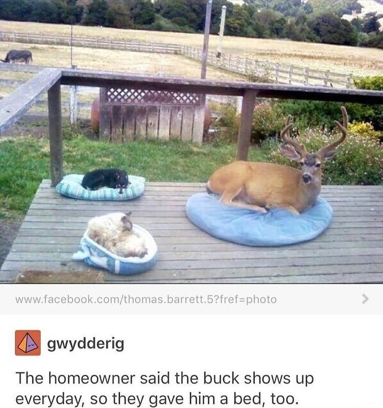 dog deer - meme