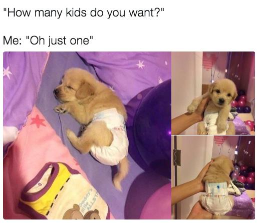 Baby doggo - meme