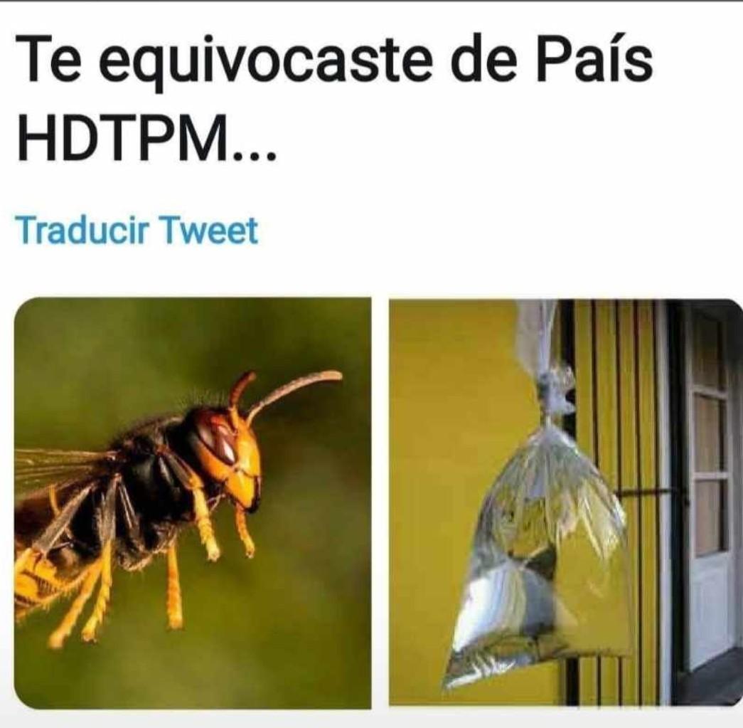 Pinches moscas - meme
