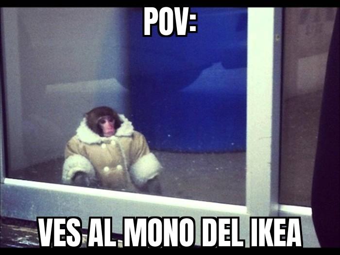 El mono del Ikea - meme