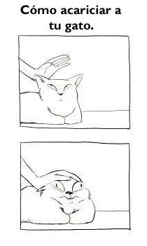 Gatos <3 - meme