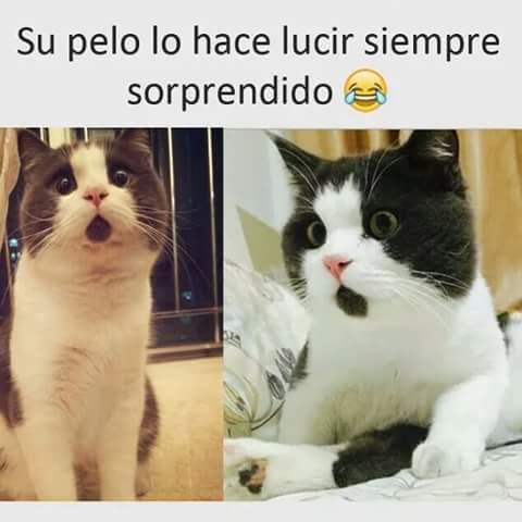 Un gatito :o - meme
