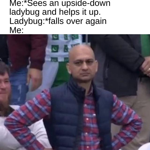 Stupid ladybug - meme