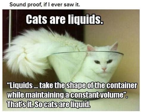 Liquid Cat - meme