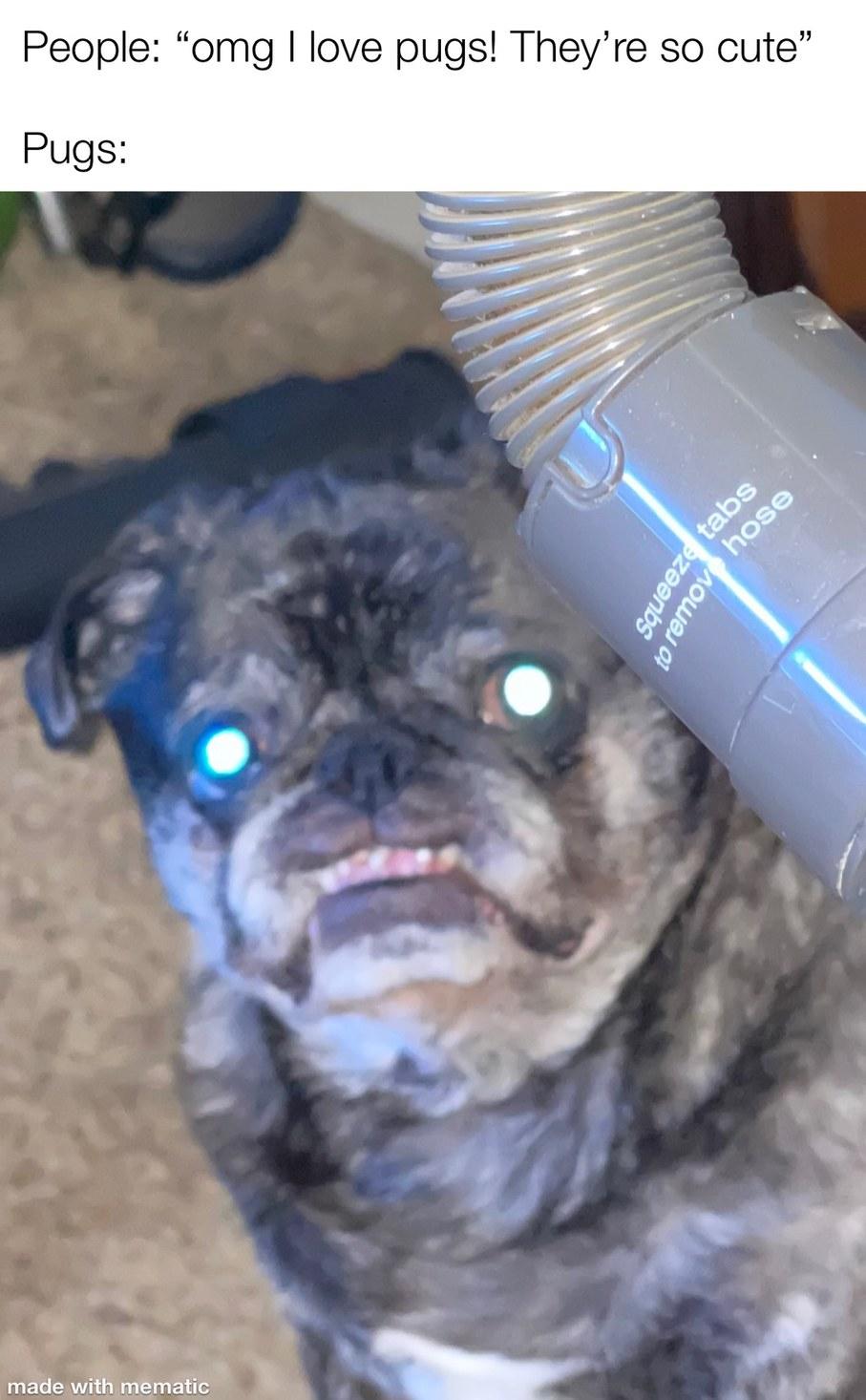 pugs be like - meme