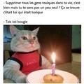 Méchant chat