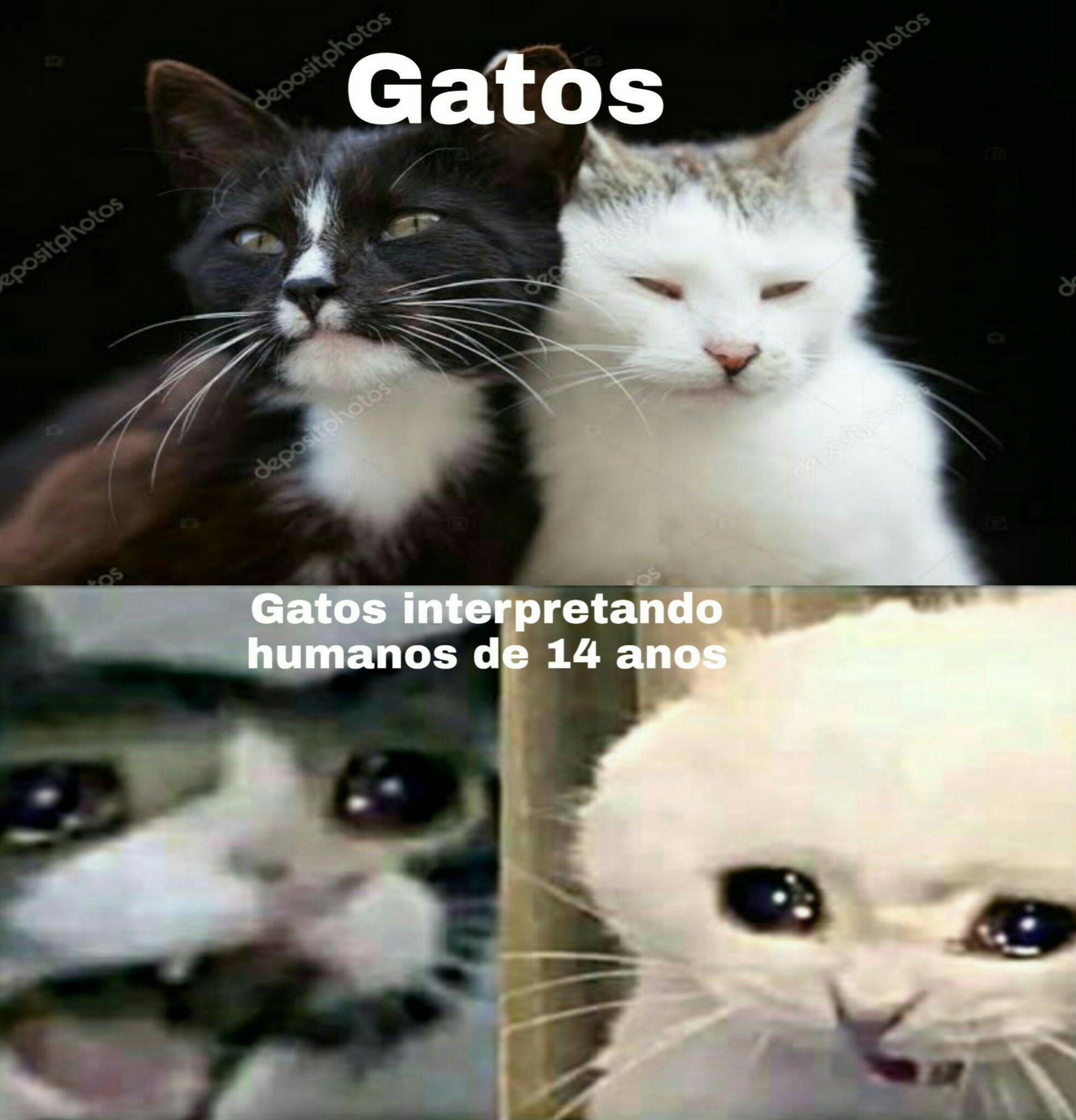 Gatos de 14 anos - meme