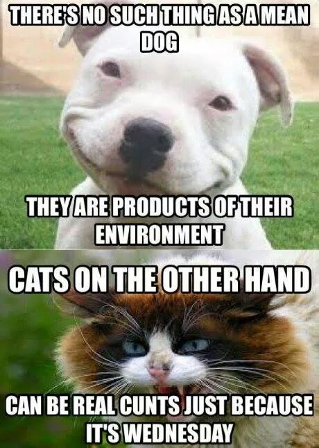 dogs and cats - meme