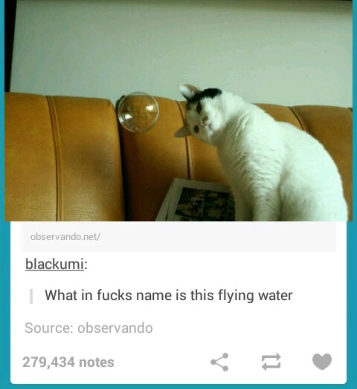 Flying water XD - meme