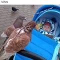 origin of birdman