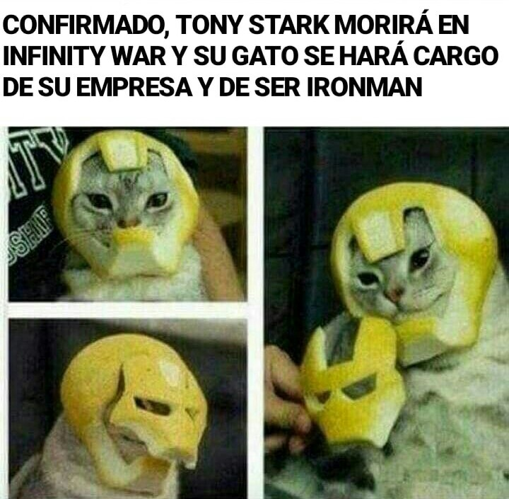 IRONCAT - meme