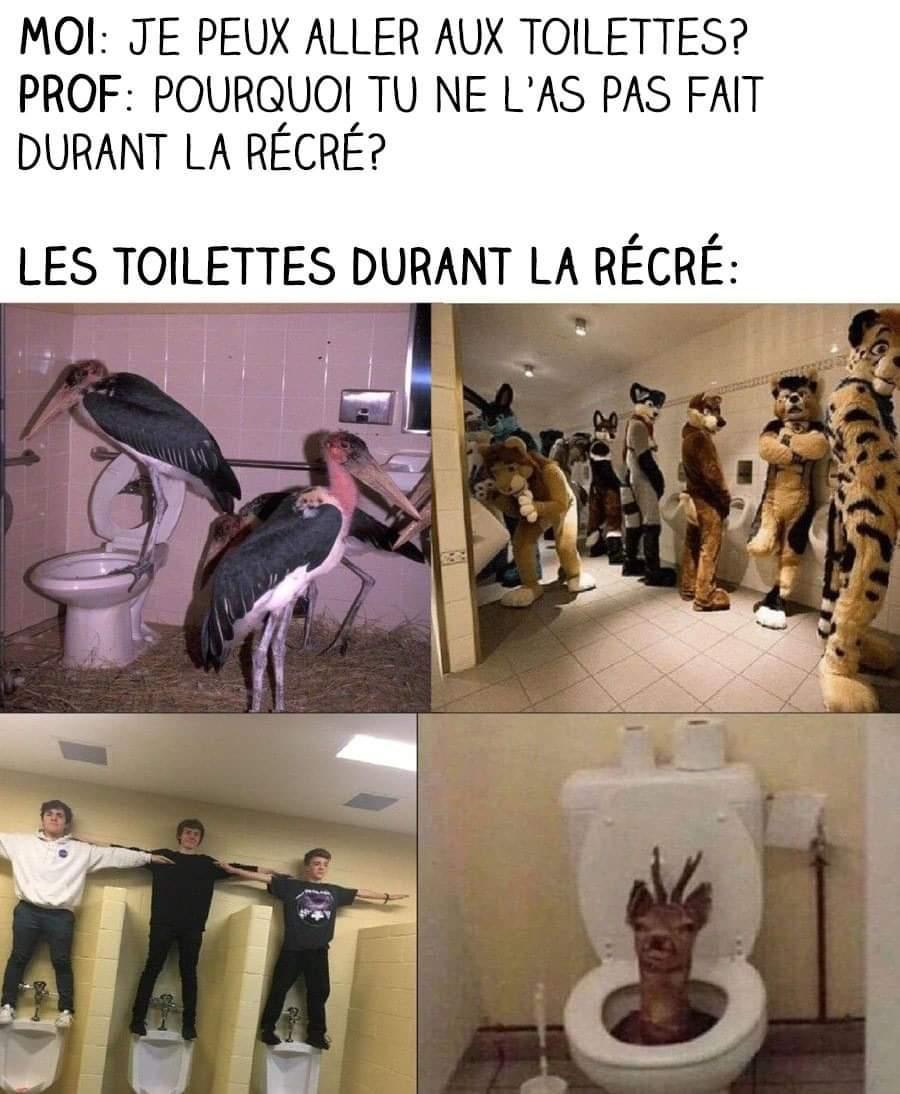 Des animaux - meme