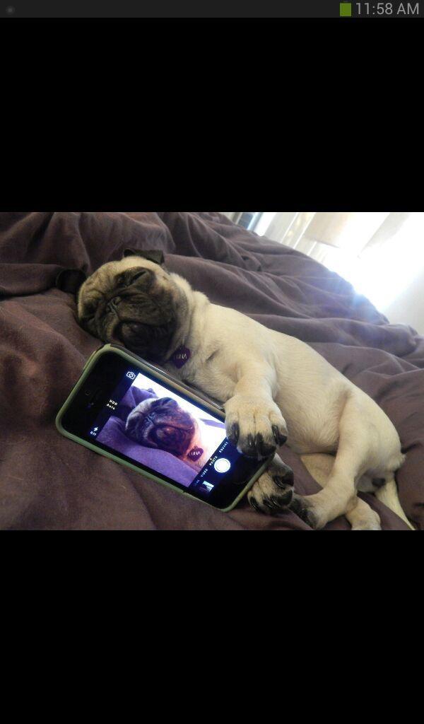 bae caught me sleepin - meme