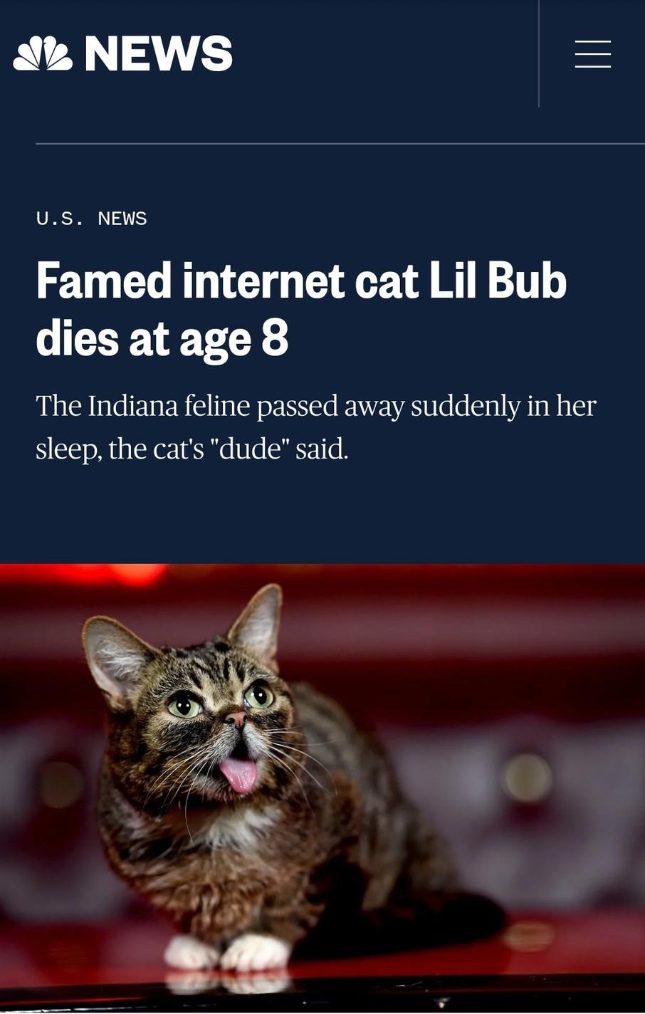 RIP, lil' Bub...I really didn't need sad news right now ;__; - meme