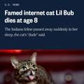 RIP, lil' Bub...I really didn't need sad news right now ;__;