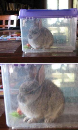 Comment éduquer un lapin - meme