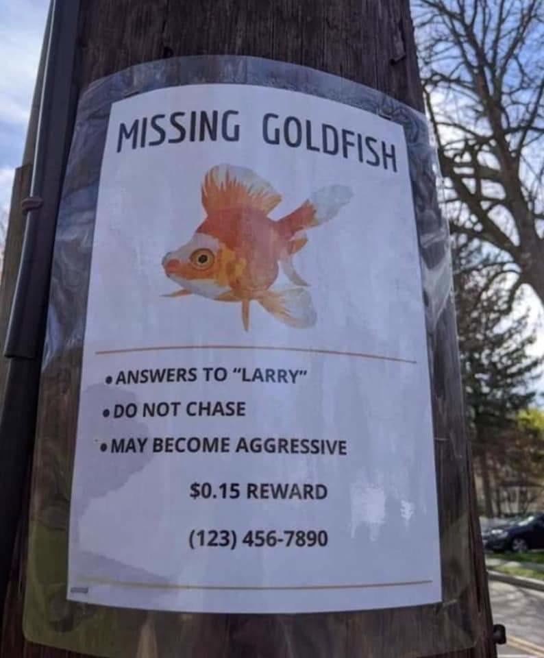 Has anyone seen Larry?  Laaaaaarrrrrrrrrrreeeeeeeyyyy!!!! - meme