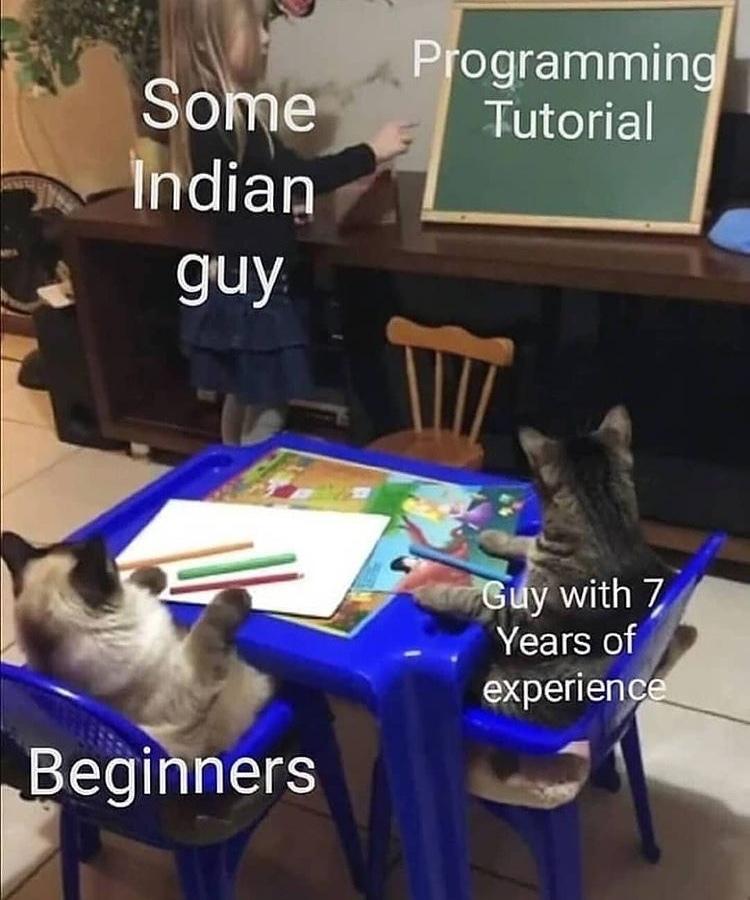 cute pussies - meme