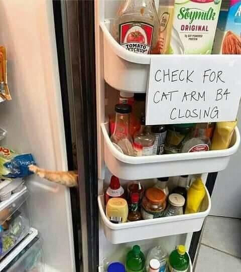 sneaky kitty cat - meme