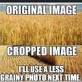 Farm puns...corny right