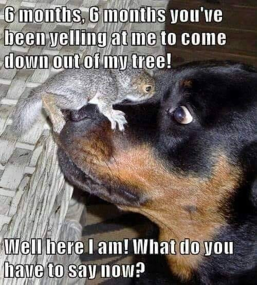 When you disturb a Squirrel - meme