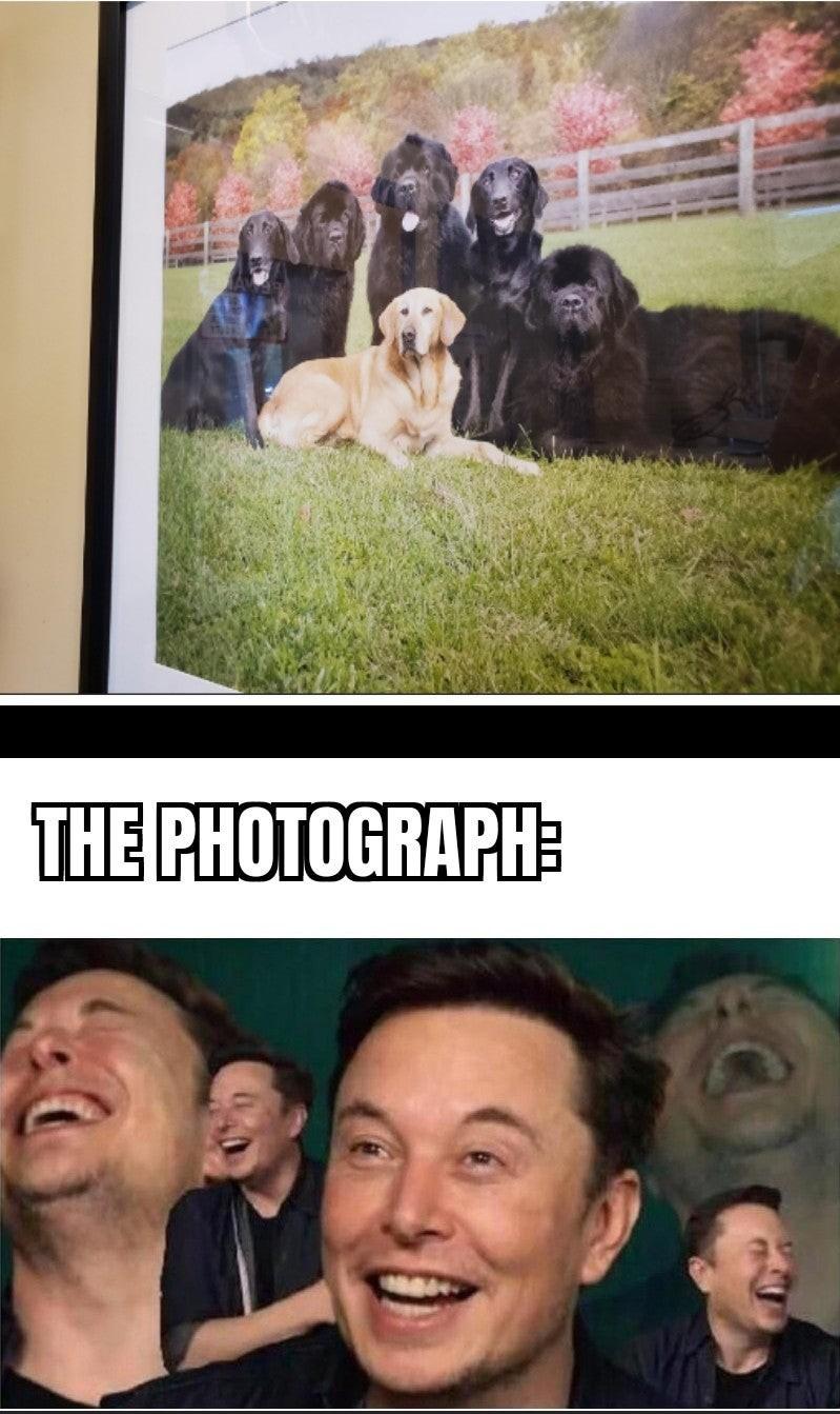 Poggers - meme